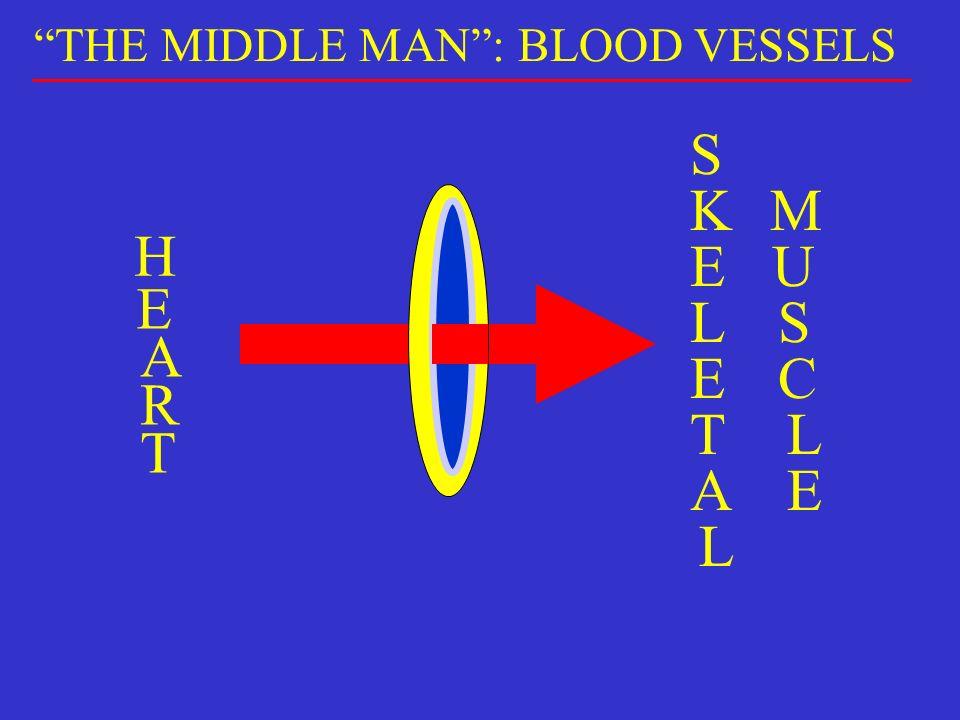 H E A R T M U S C L E S K E L E T A L THE MIDDLE MAN: BLOOD VESSELS
