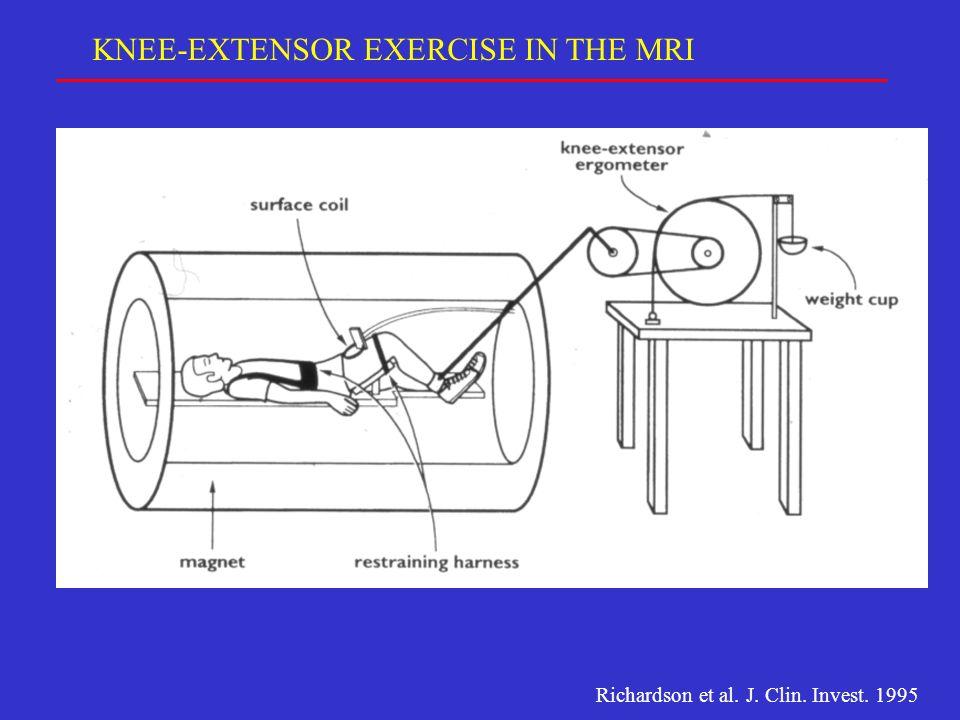 KNEE-EXTENSOR EXERCISE IN THE MRI Richardson et al. J. Clin. Invest. 1995