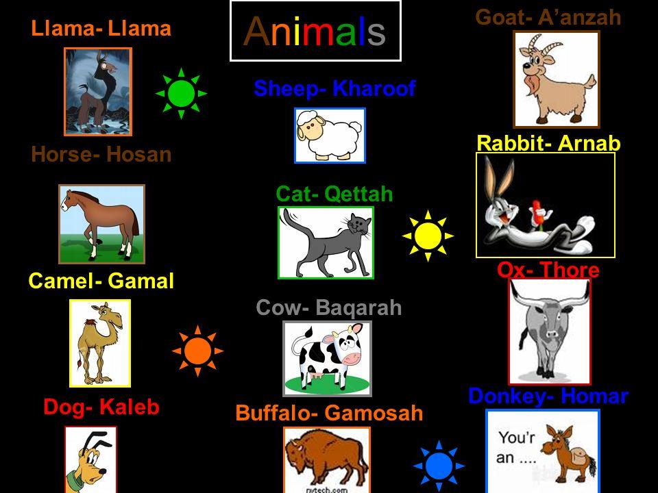 Animals Llama- Llama Horse- Hosan Camel- Gamal Dog- Kaleb Goat- Aanzah Rabbit- Arnab Ox- Thore Donkey- Homar Sheep- Kharoof Cat- Qettah Cow- Baqarah B