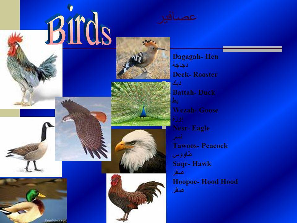 عصافير Dagagah- Hen دجاجة Deek- Rooster ديك Battah- Duck بطّ Wezah- Goose إوزّة Nesr- Eagle نسر Tawoos- Peacock طاووس Saqr- Hawk صقر Hoopoe- Hood Hood صقر