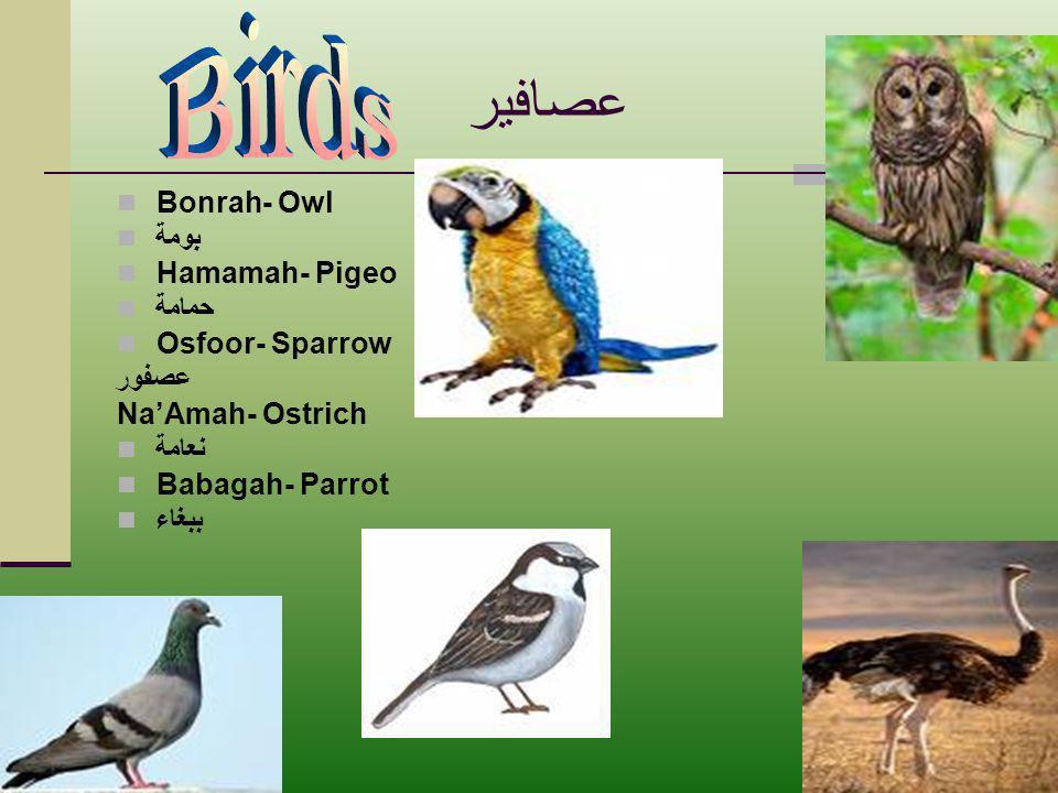 عصافير Bonrah- Owl بومة Hamamah- Pigeo حمامة Osfoor- Sparrow عصفور NaAmah- Ostrich نعامة Babagah- Parrot ببغاء