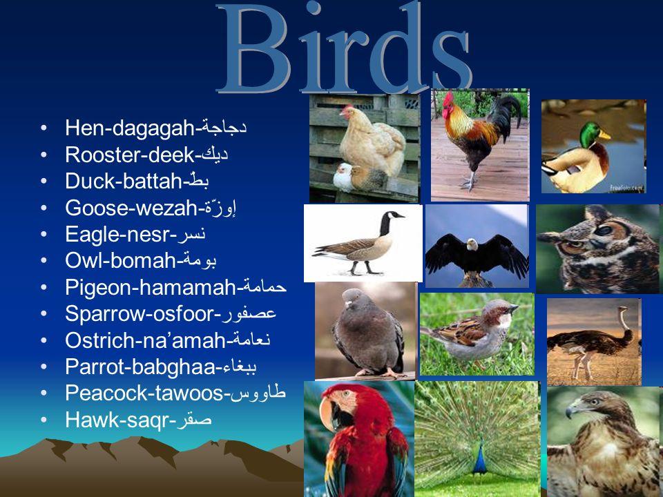 Hen-dagagah-دجاجة Rooster-deek-ديك Duck-battah-بطّ Goose-wezah-إوزّة Eagle-nesr-نسر Owl-bomah-بومة Pigeon-hamamah-حمامة Sparrow-osfoor-عصفور Ostrich-n