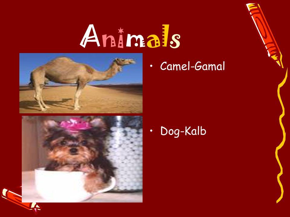 Animals Camel-Gamal Dog-Kalb