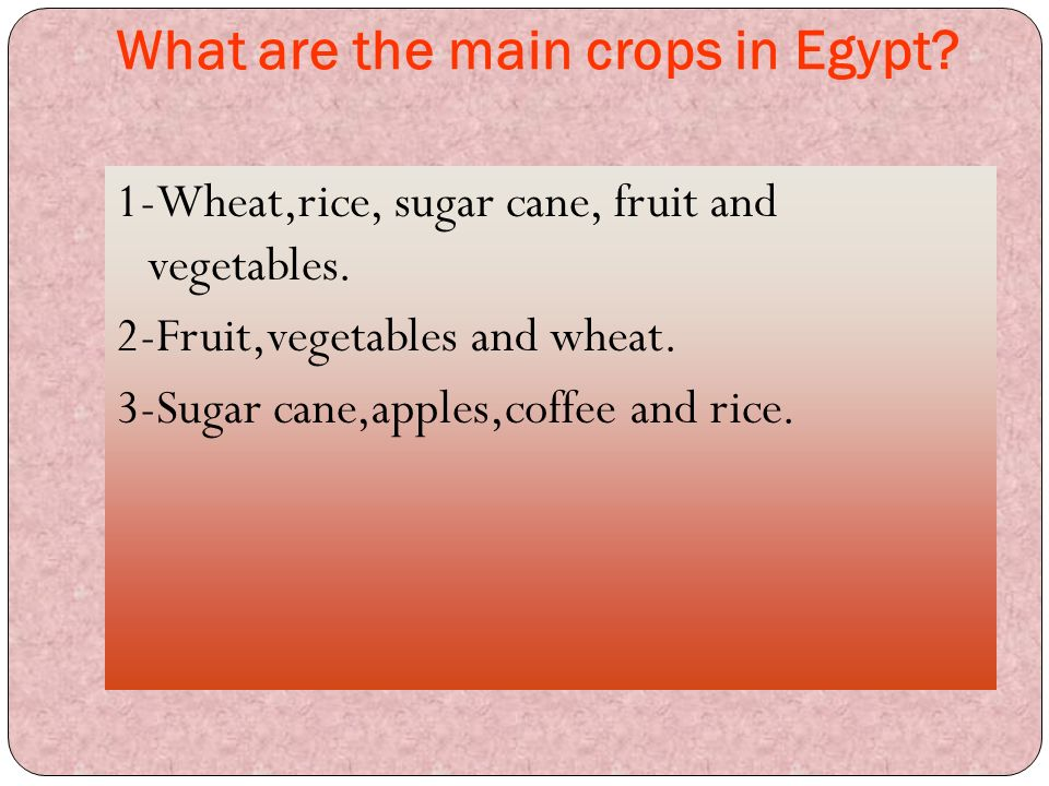 What are the main crops in Egypt? 1-Wheat,rice, sugar cane, fruit and vegetables. 2-Fruit,vegetables and wheat. 3-Sugar cane,apples,coffee and rice.