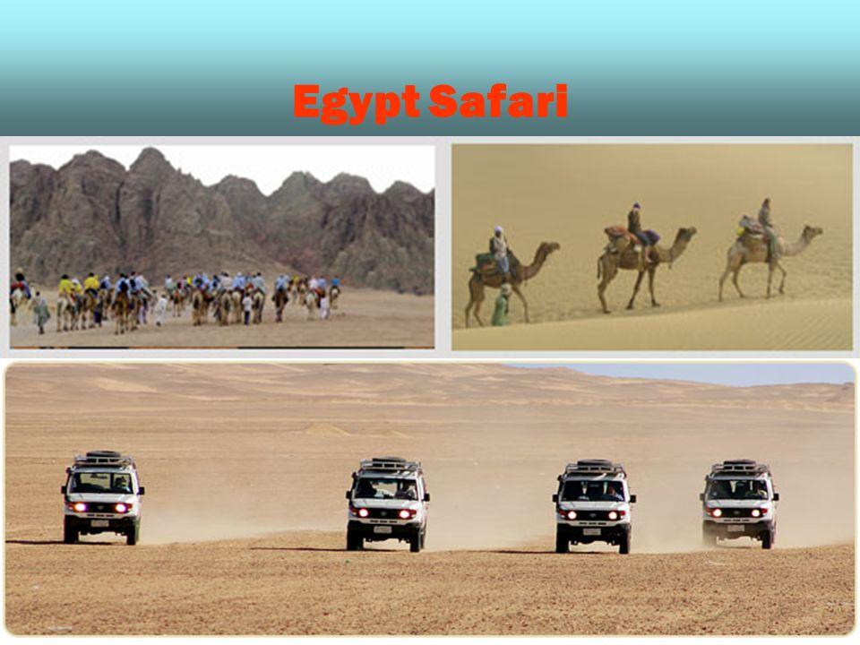 Egypt Safari