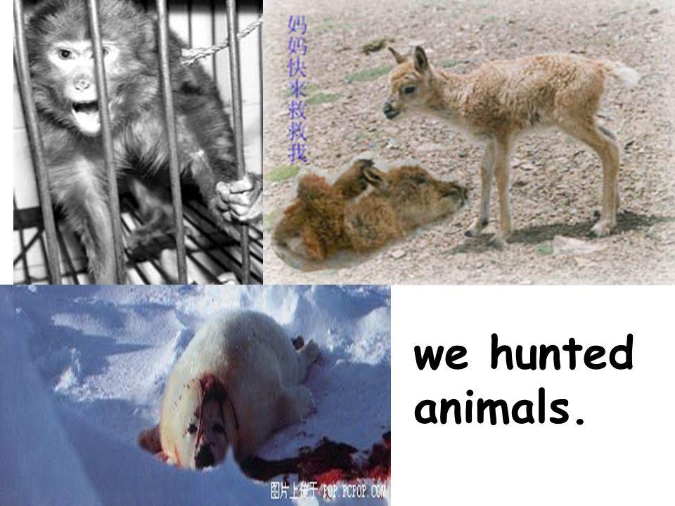 we hunted animals.