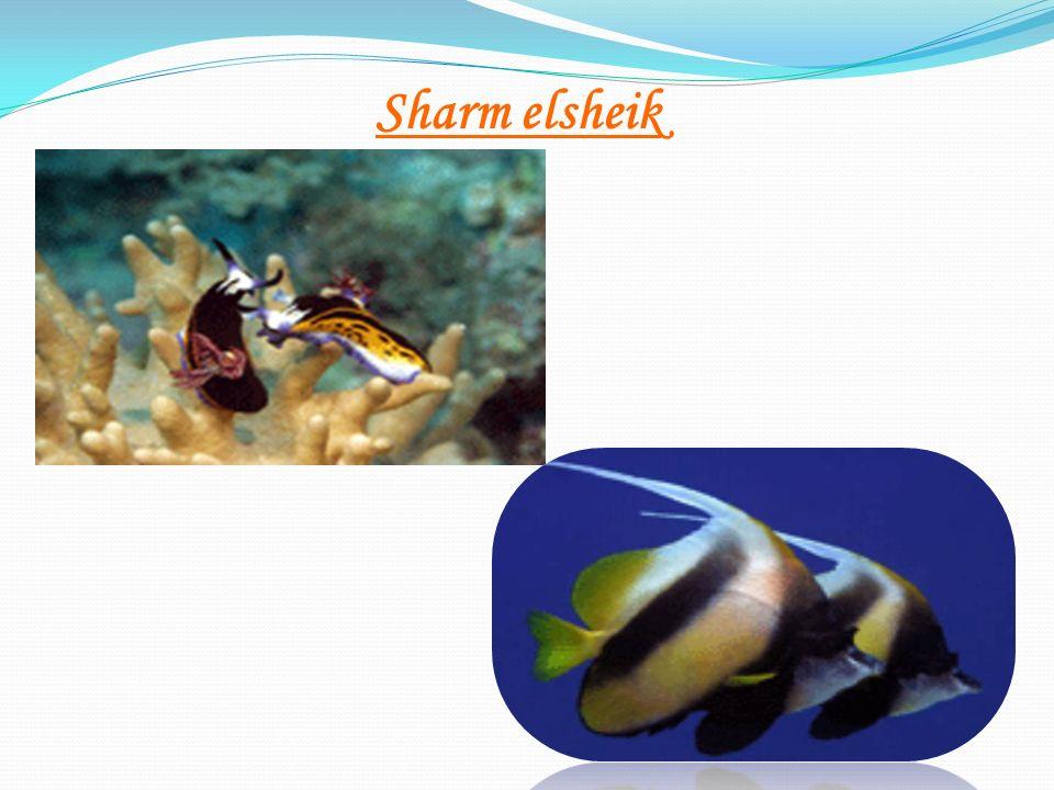 Sharm elsheik