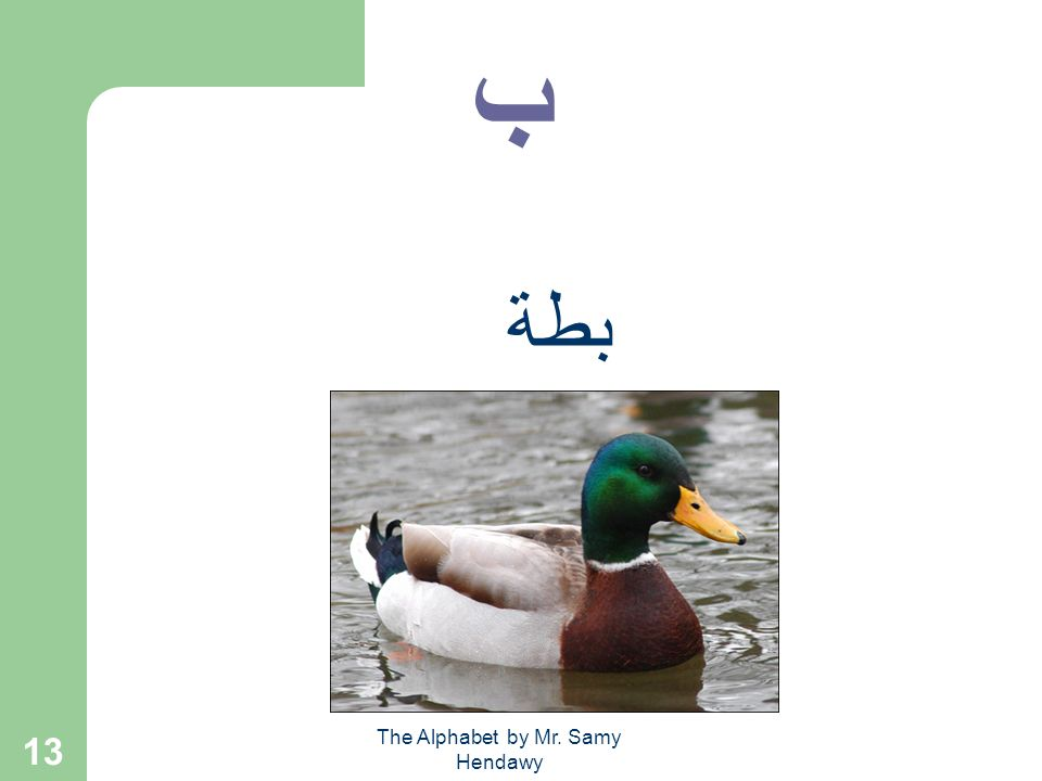 The Alphabet by Mr. Samy Hendawy 12 ب بقرة