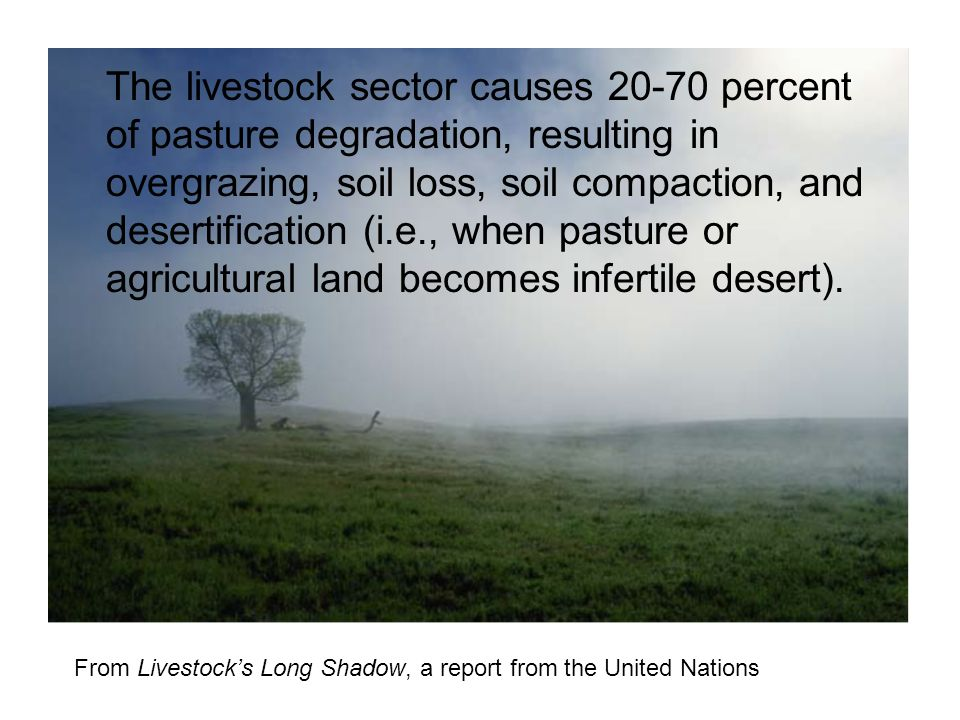 The livestock sector causes 20-70 percent of pasture degradation, resulting in overgrazing, soil loss, soil compaction, and desertification (i.e., when pasture or agricultural land becomes infertile desert).