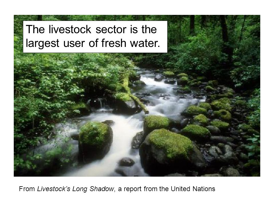 The livestock sector is the largest user of fresh water.