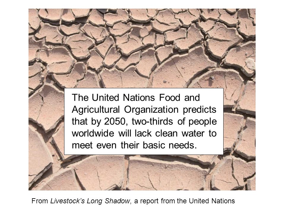 The United Nations Food and Agricultural Organization predicts that by 2050, two-thirds of people worldwide will lack clean water to meet even their b