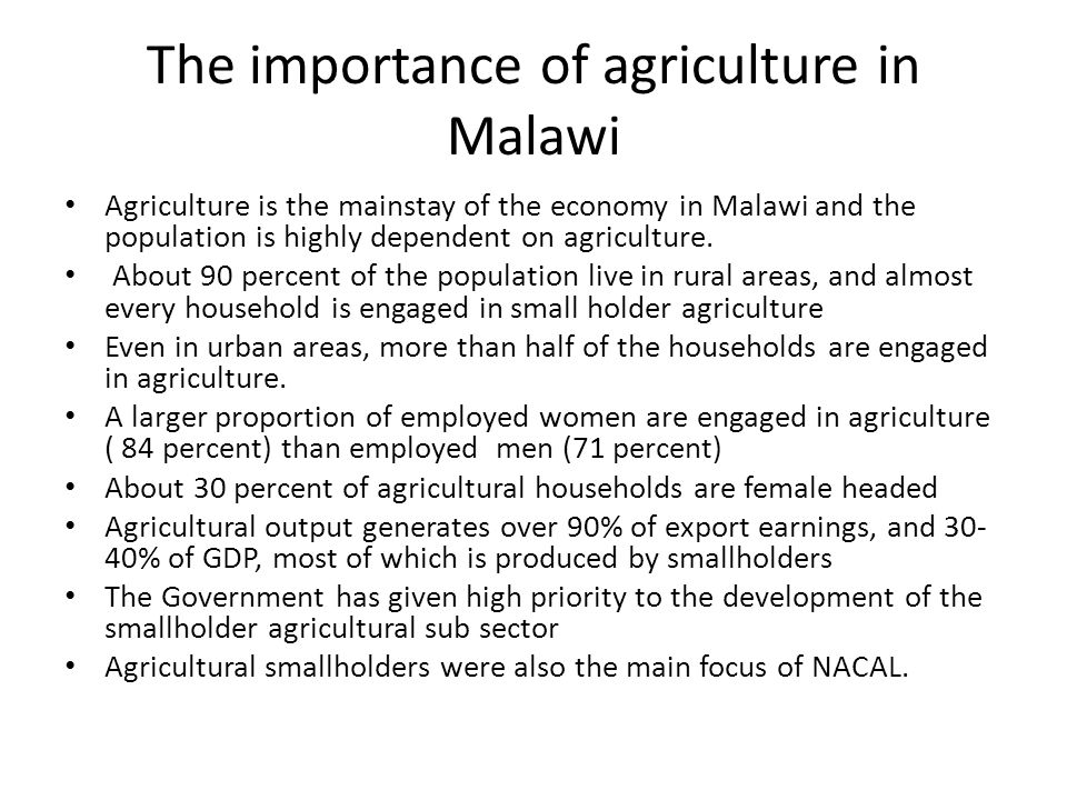 The importance of agriculture in Malawi Agriculture is the mainstay of the economy in Malawi and the population is highly dependent on agriculture. Ab