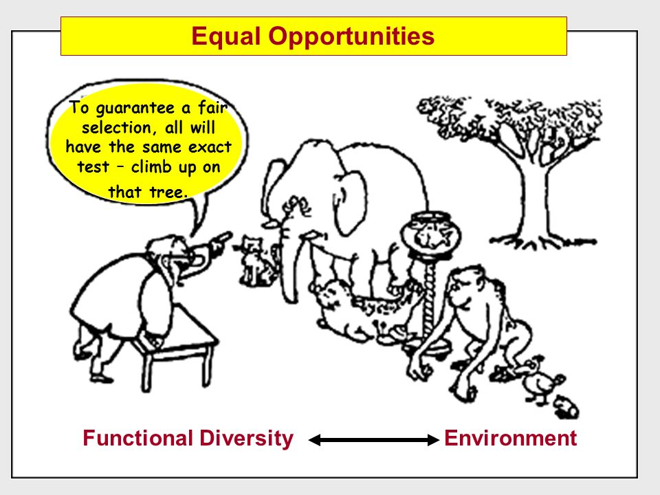 Functional Diversity Environment To guarantee a fair selection, all will have the same exact test – climb up on that tree. Equal Opportunities