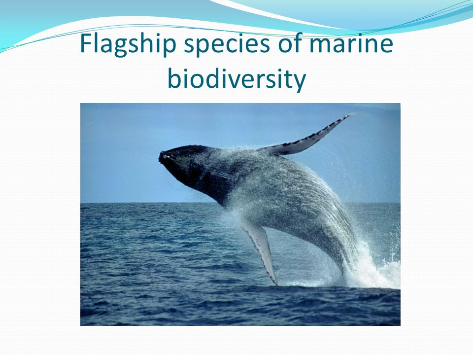 Flagship species of marine biodiversity