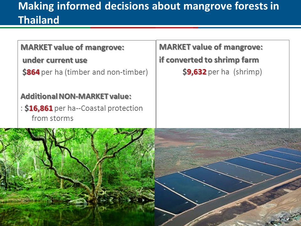 Click to edit Master title style MARKET value of mangrove: if converted to shrimp farm $9,632 $9,632 per ha (shrimp) MARKET value of mangrove: under c