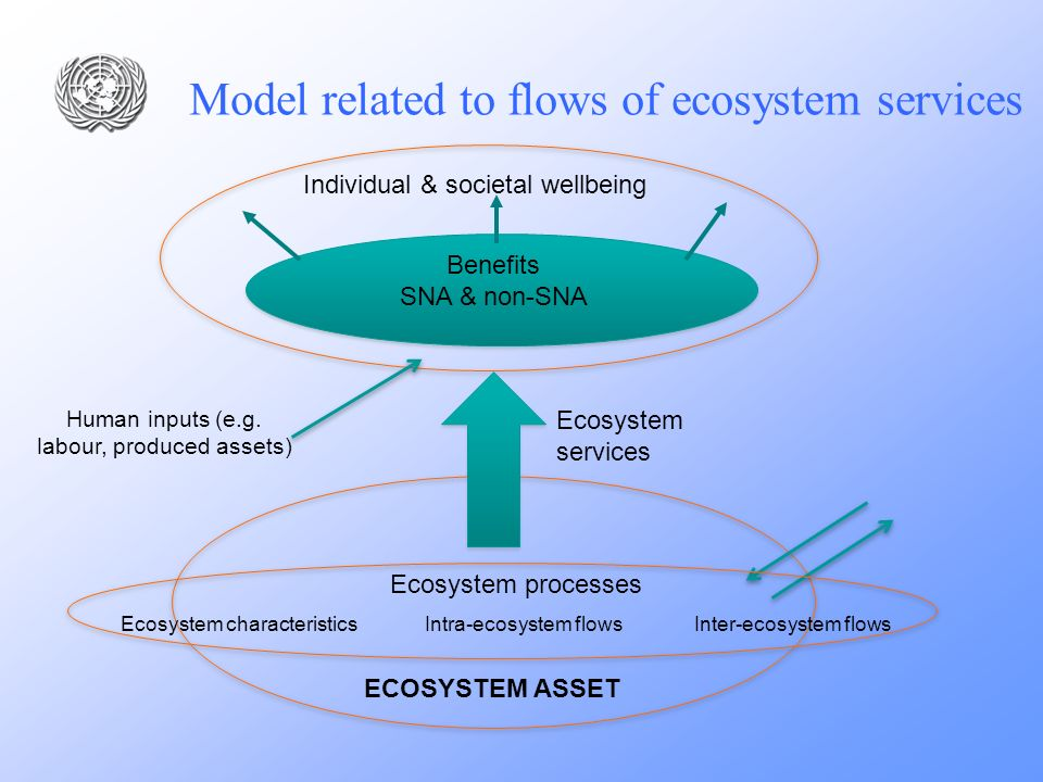 Model related to flows of ecosystem services Individual & societal wellbeing Benefits SNA & non-SNA Ecosystem services ECOSYSTEM ASSET Ecosystem chara