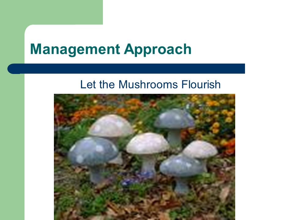 Management Approach Let the Mushrooms Flourish