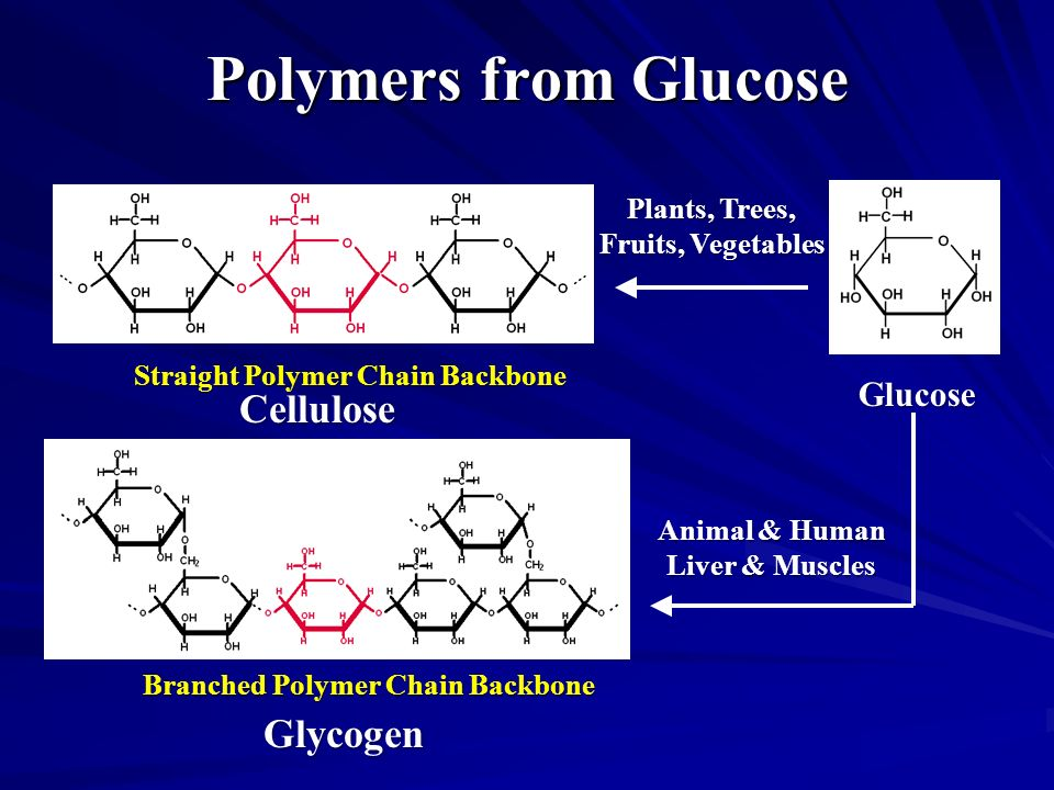 Polymers from Glucose Straight Polymer Chain Backbone Branched Polymer Chain Backbone Cellulose Glucose Glycogen Animal & Human Liver & Muscles Plants