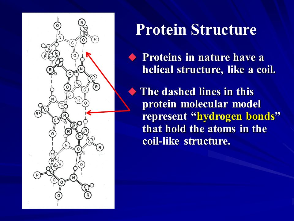 Protein Structure Proteins in nature have a helical structure, like a coil. Proteins in nature have a helical structure, like a coil. The dashed lines