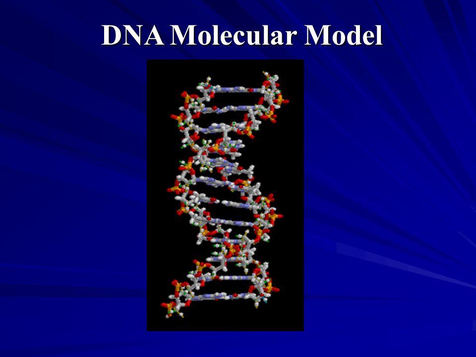 DNA Molecular Model Methane