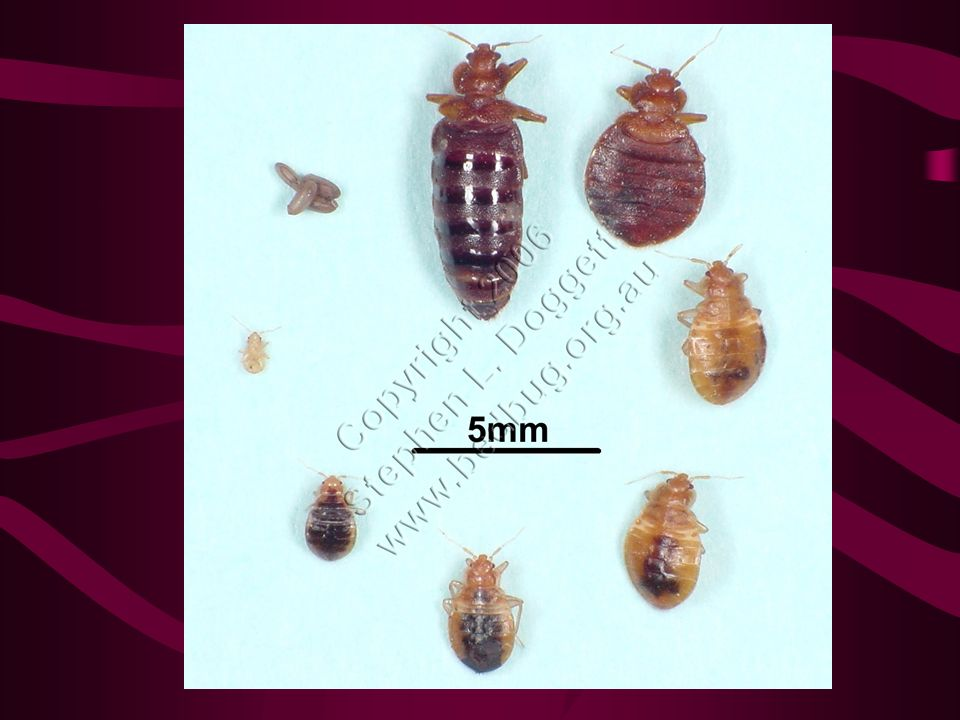 Now What… Bedbug Policy Task Force –Policy Change Reducing risk factors –Curbside bedding/furniture pick-up Addressing areas of concern –Used furniture and clothing operations Increase funding to treat/support treatment –Public Education Increase access to educational materials Reduce stigma