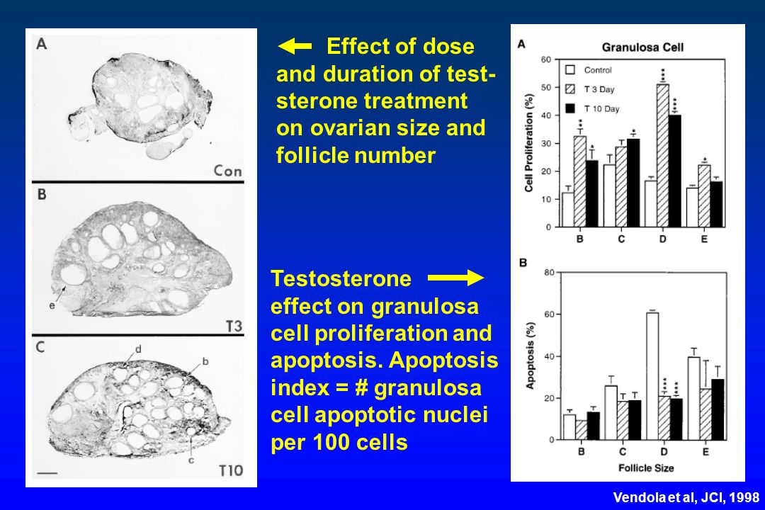 Effect of dose and duration of test- sterone treatment on ovarian size and follicle number Testosterone effect on granulosa cell proliferation and apo