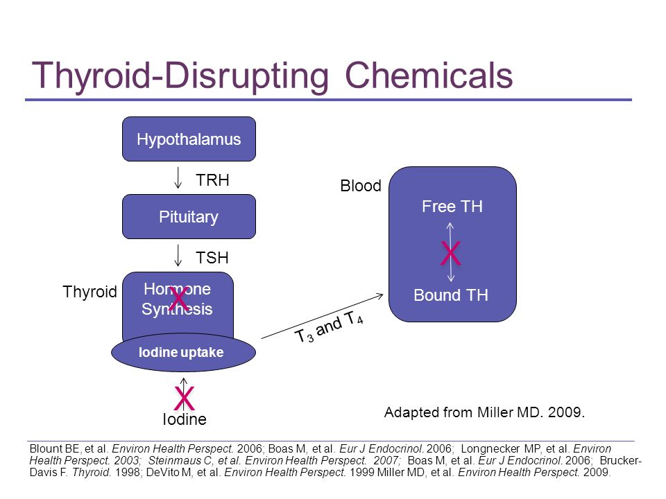 Thyroid-Disrupting Chemicals Blount BE, et al. Environ Health Perspect. 2006; Boas M, et al. Eur J Endocrinol. 2006; Longnecker MP, et al. Environ Hea