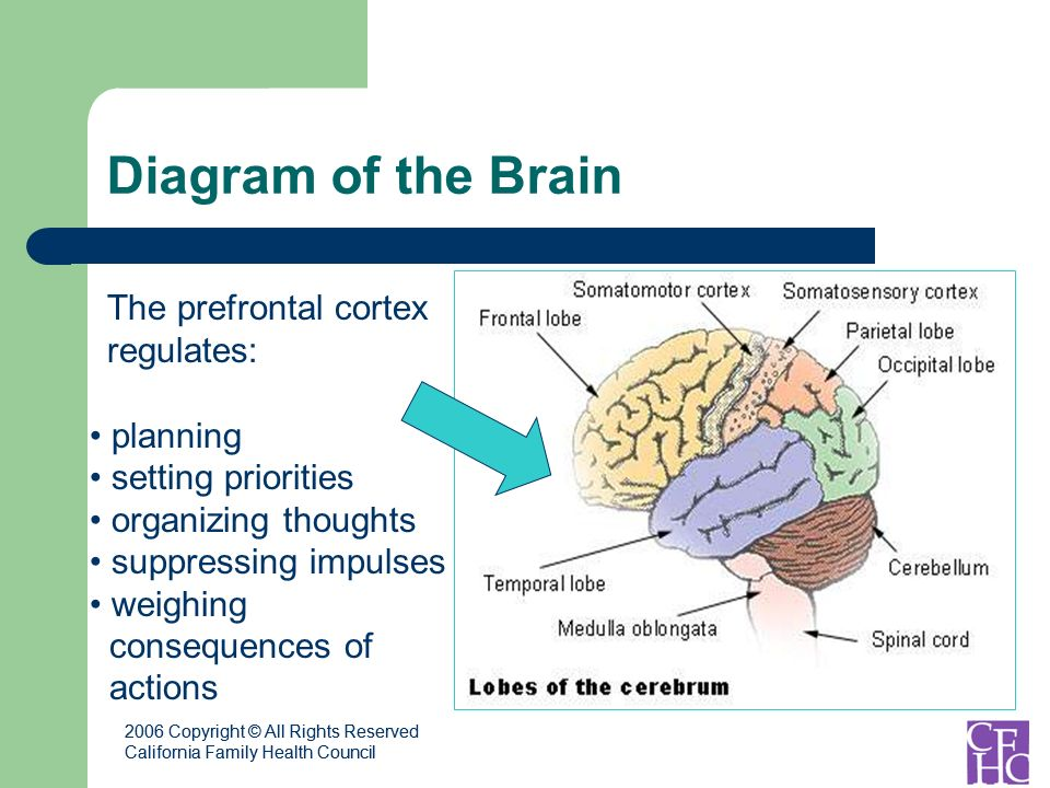 2006 Copyright © All Rights Reserved California Family Health Council 2006 Copyright © All Rights Reserved California Family Health Council Diagram of the Brain planning setting priorities organizing thoughts suppressing impulses weighing consequences of actions The prefrontal cortex regulates: