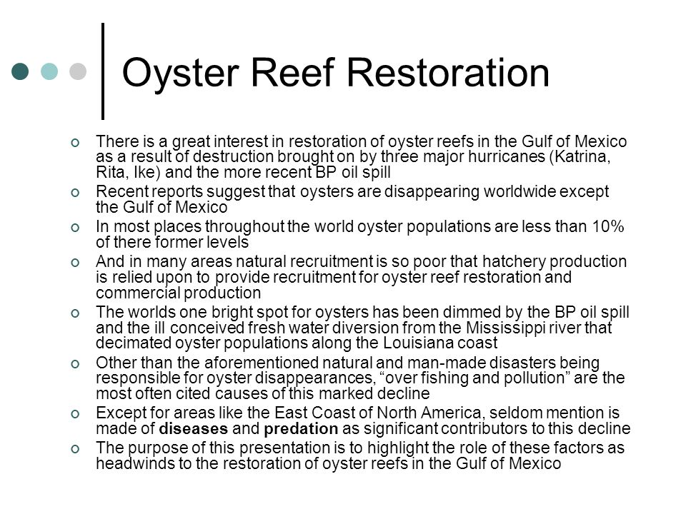 Oyster Reef Restoration There is a great interest in restoration of oyster reefs in the Gulf of Mexico as a result of destruction brought on by three