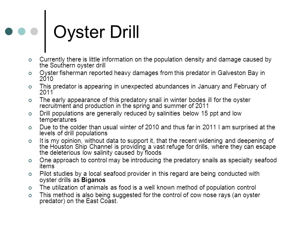 Oyster Drill Currently there is little information on the population density and damage caused by the Southern oyster drill Oyster fisherman reported