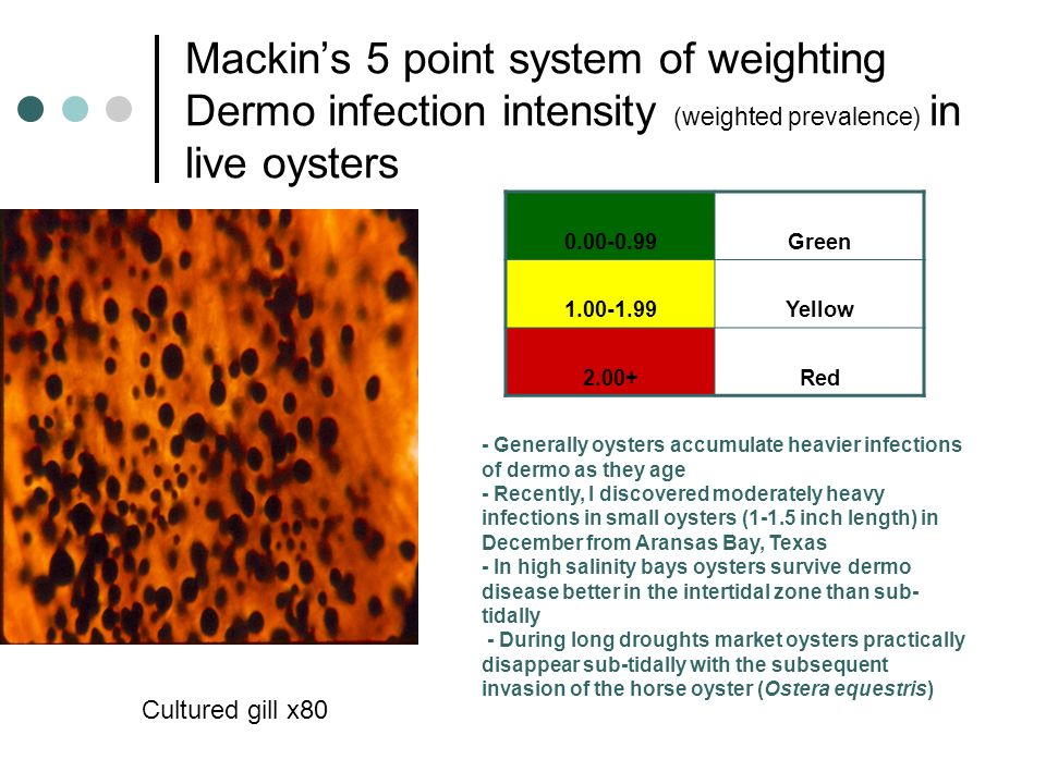Mackins 5 point system of weighting Dermo infection intensity (weighted prevalence) in live oysters Cultured gill x80 0.00-0.99Green 1.00-1.99Yellow 2