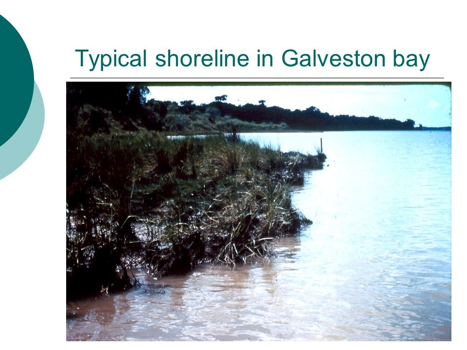 Typical shoreline in Galveston bay