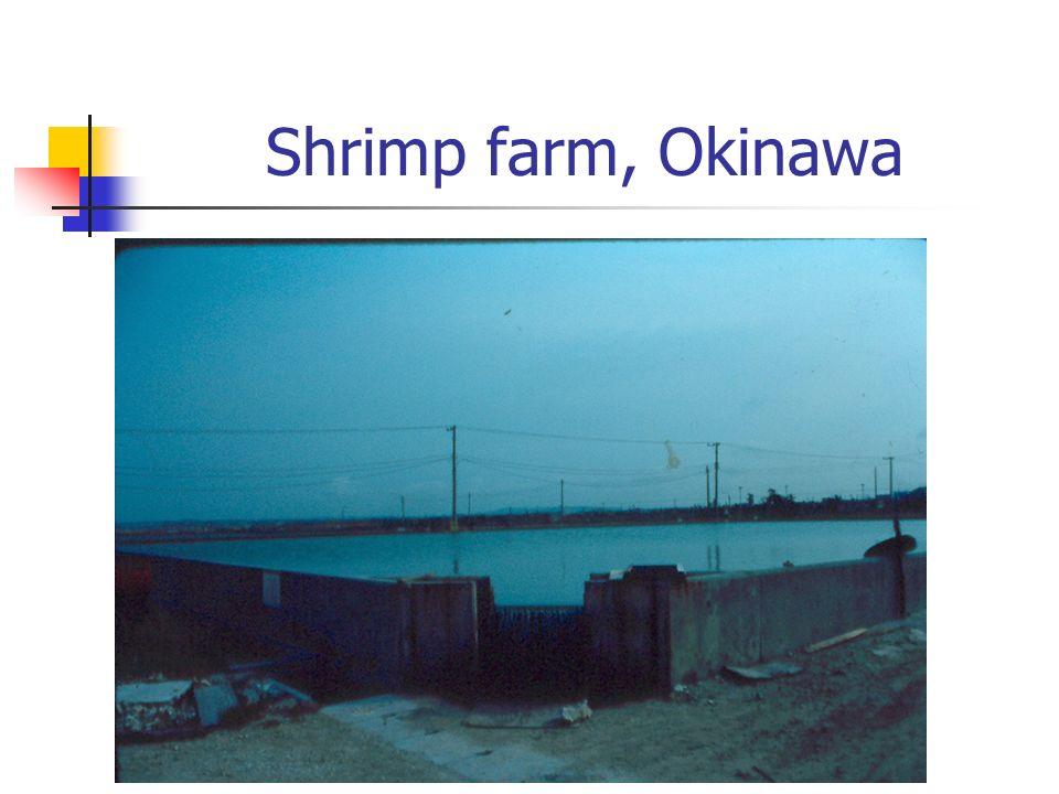 Shrimp farm, Okinawa