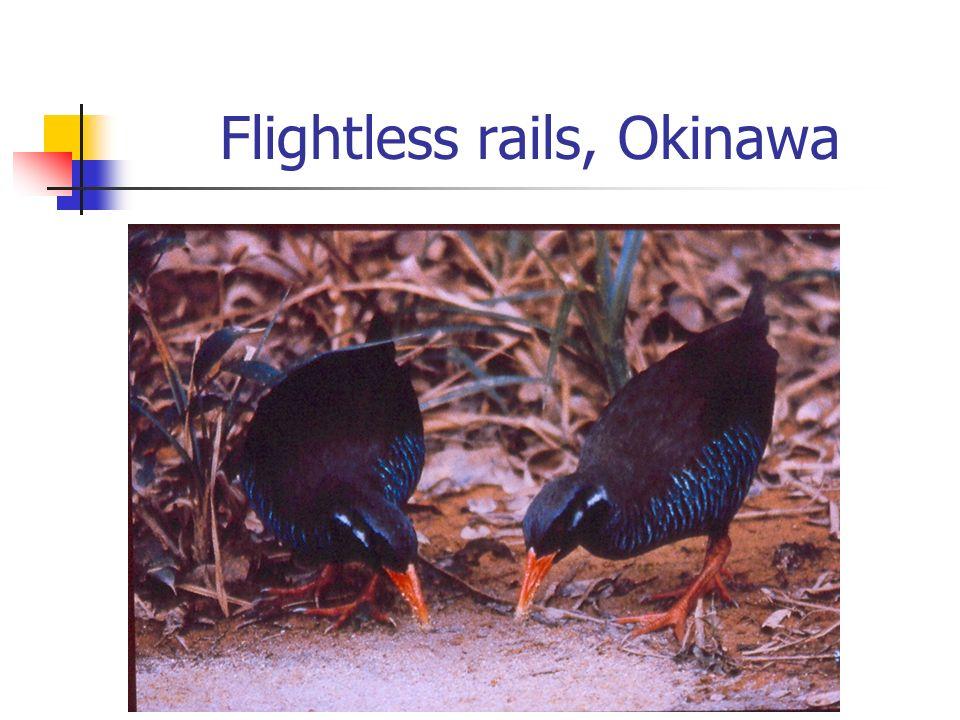 Flightless rails, Okinawa