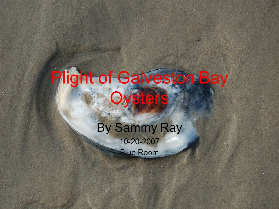 Plight of Galveston Bay Oysters By Sammy Ray 10-20-2007 Blue Room