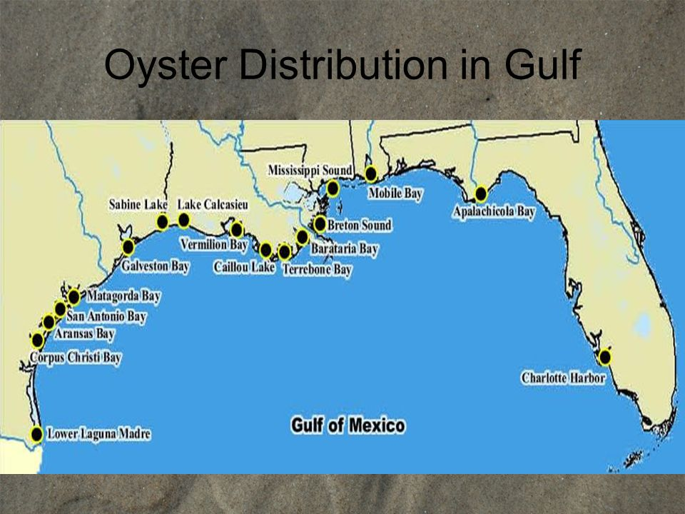 Oyster Distribution in Gulf