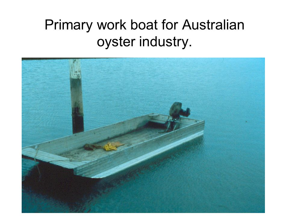 Primary work boat for Australian oyster industry.