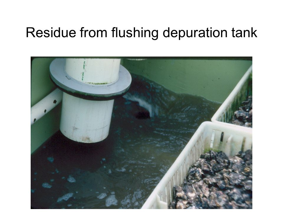 Residue from flushing depuration tank