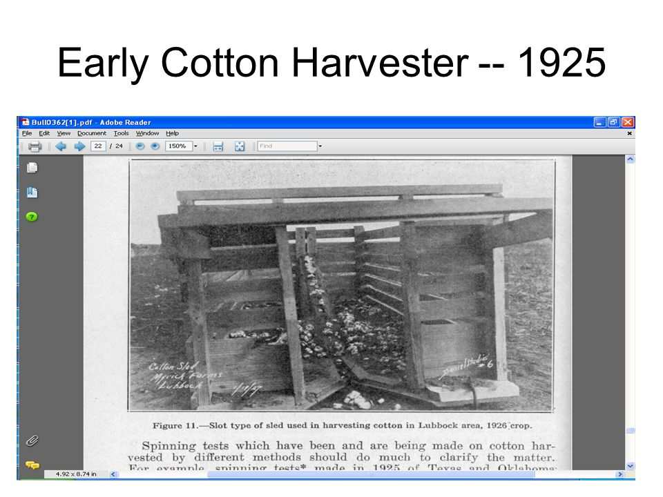 Early Cotton Harvester