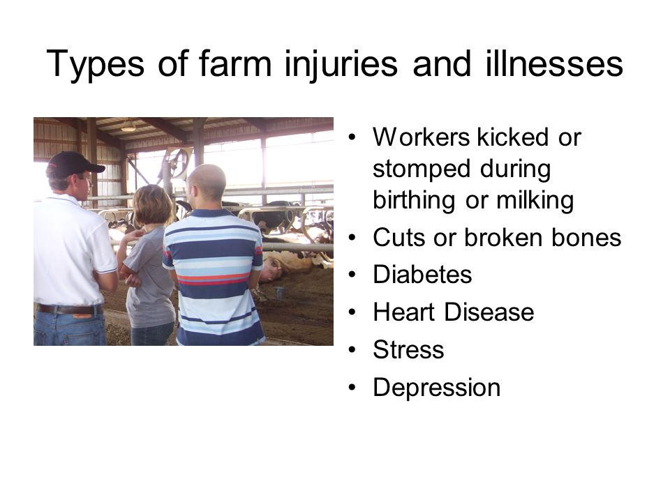 Types of farm injuries and illnesses Workers kicked or stomped during birthing or milking Cuts or broken bones Diabetes Heart Disease Stress Depressio
