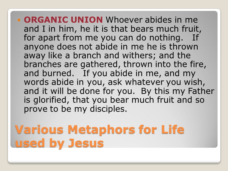 Various Metaphors for Life used by Jesus ORGANIC UNION Whoever abides in me and I in him, he it is that bears much fruit, for apart from me you can do nothing.