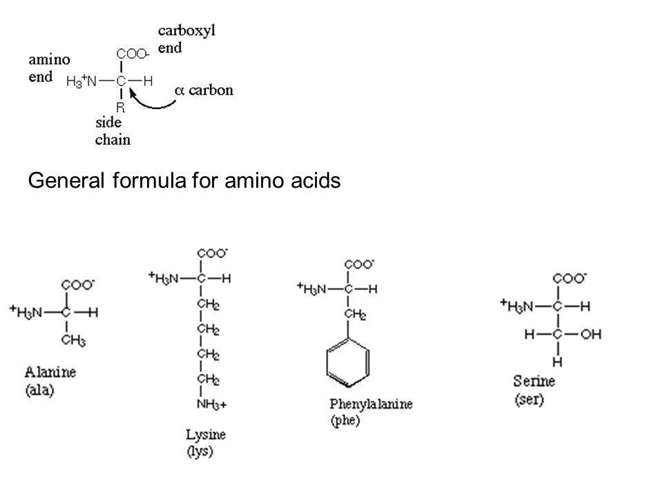 General formula for amino acids
