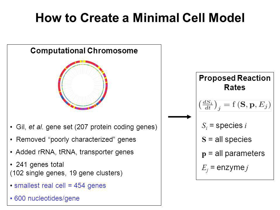 How to Create a Minimal Cell Model Computational Chromosome Gil, et al. gene set (207 protein coding genes) Removed poorly characterized genes Added r