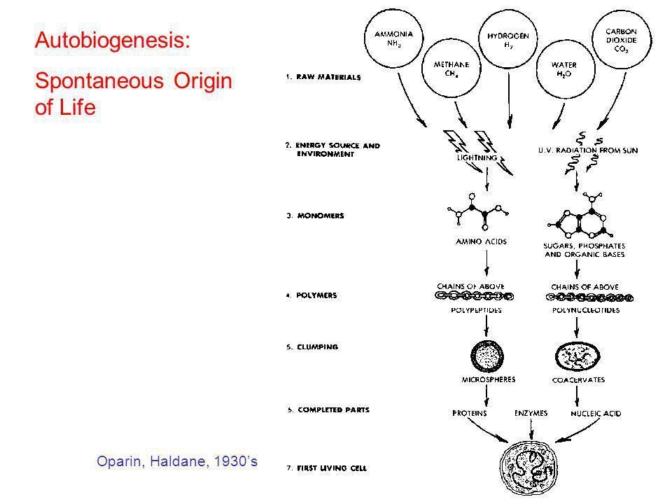 Oparin, Haldane, 1930s Autobiogenesis: Spontaneous Origin of Life