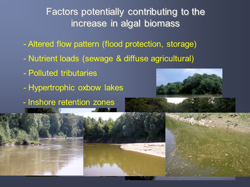 Factors potentially contributing to the increase in algal biomass Factors potentially contributing to the increase in algal biomass - Altered flow pat