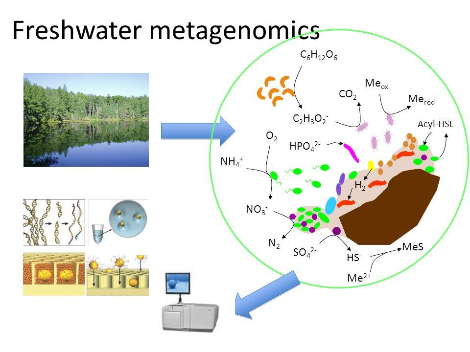 Freshwater metagenomics NO 3 - N2N2 NH 4 + O2O2 H2H2 Me ox Me red C2H3O2-C2H3O2- CO 2 Acyl-HSL HPO 4 2- C 6 H 12 O 6 SO 4 2- HS - Me 2+ MeS