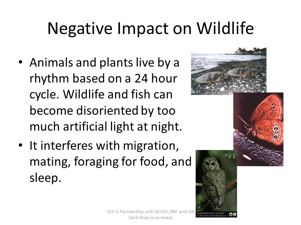Negative Impact on Wildlife Animals and plants live by a rhythm based on a 24 hour cycle.