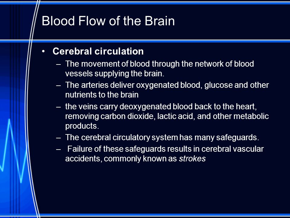 Blood Flow of the Brain Cerebral circulation –The movement of blood through the network of blood vessels supplying the brain. –The arteries deliver ox