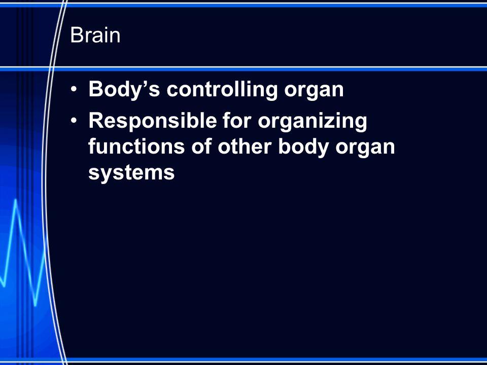 Brain Anatomy Review Occupies 80% of intracranial space Divisions –Cerebrum –Cerebellum –Brain Stem