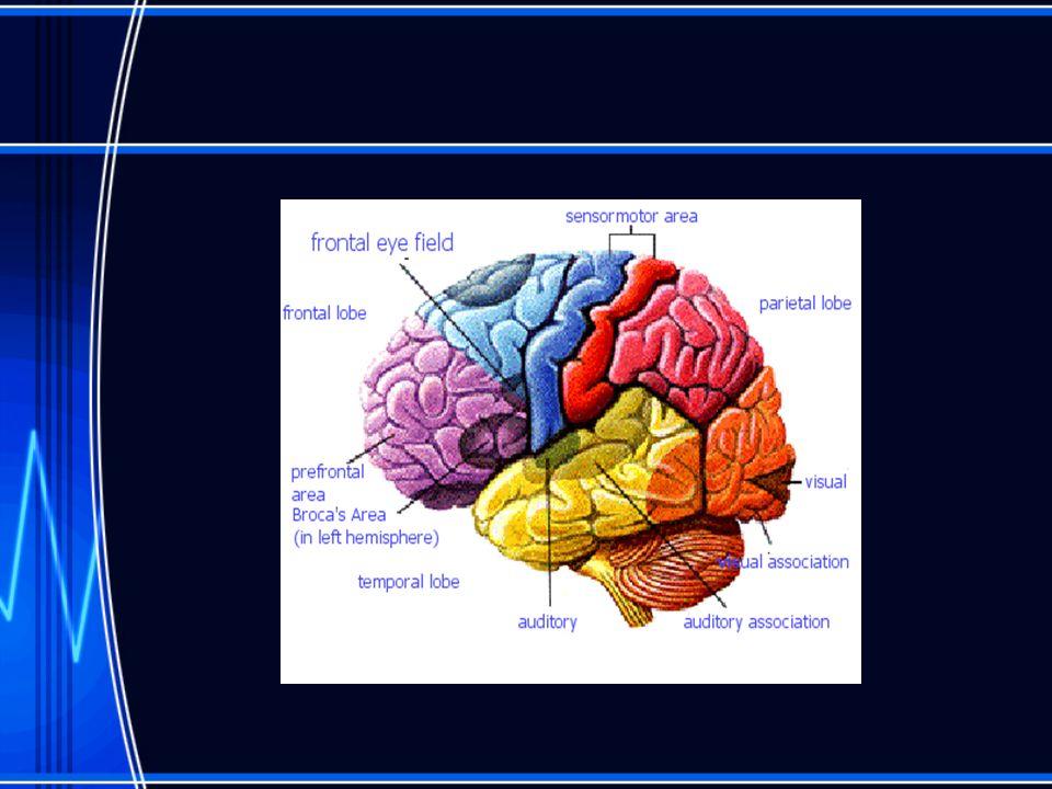 Hemorrhages Extracerebral hemorrhages bleeding outside of the brain –Subarachnoid – subdural –extradural Intracerebral hemorrhages –Within brain substance bleed